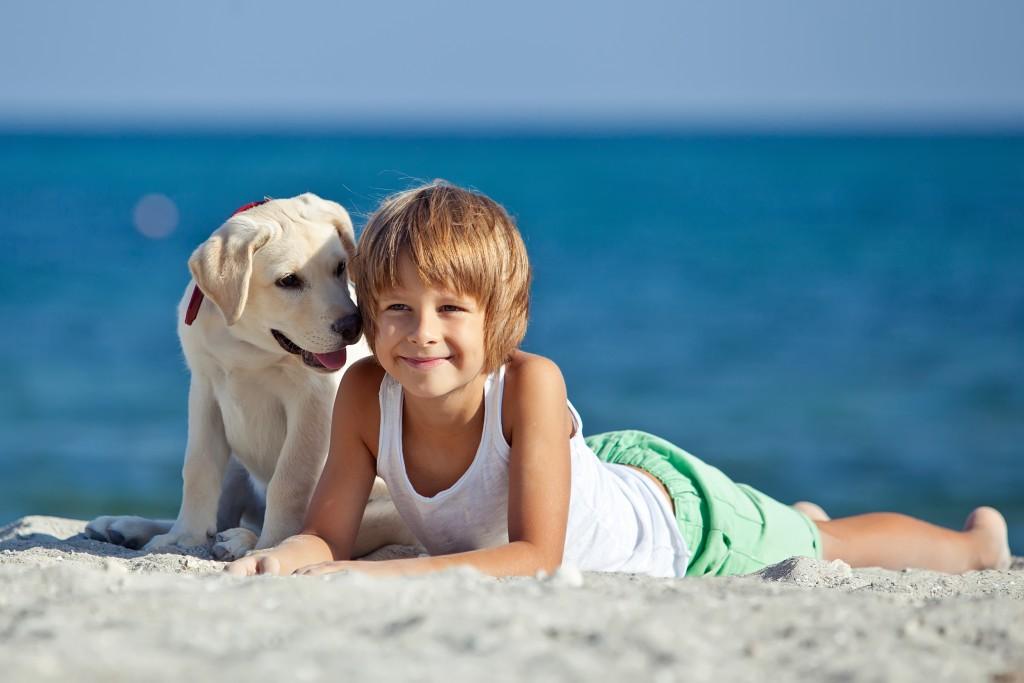 Urlaub mit dem Hund: Was ist zu beachten?