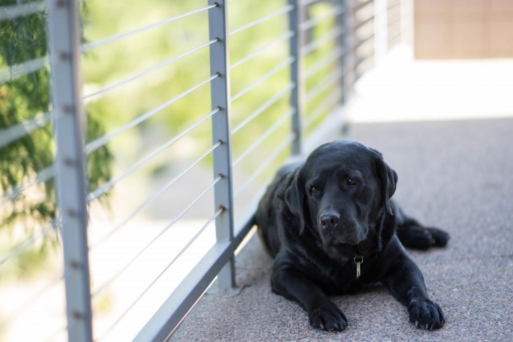 Labrador in Hundepenison • Quelle: https://unsplash.com/photos/GEhel8749cY