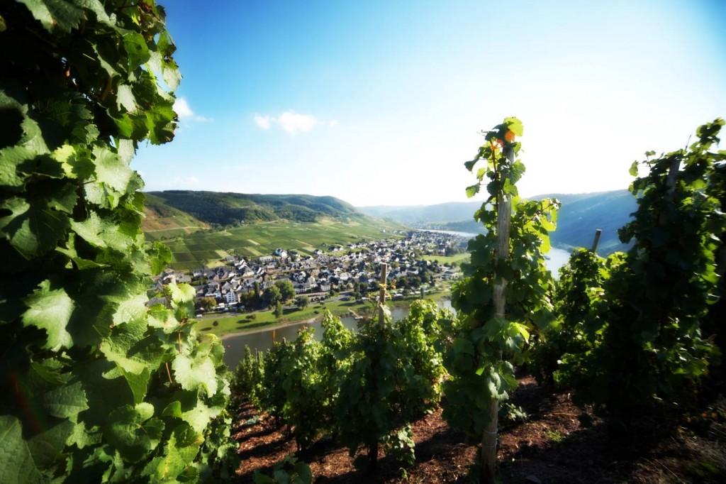 Regionale Besonderheiten des Weinanbaugebiets Mosel