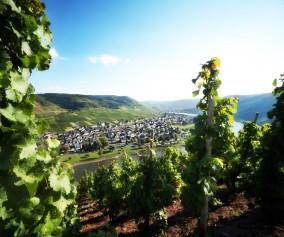 Weinberg bei Cochem mit Aussicht auf die Mosel