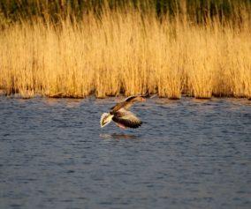 Familienurlaub in der Mecklenburgischen Seenplatte