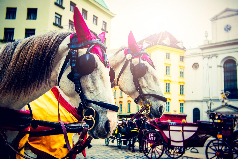 Flitterwochen Wien